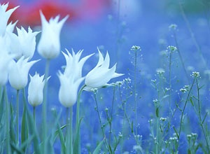 主賜福如春雨